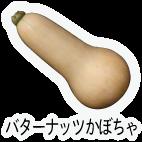 商品-野菜果菜-バターナッツかぼちゃ