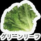 商品-野菜葉茎菜-グリーンリーフ