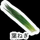 商品-野菜葉茎菜-葉ねぎ
