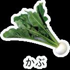 商品-野菜根菜-かぶ