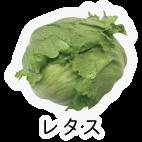 商品-野菜葉茎菜-レタス_2
