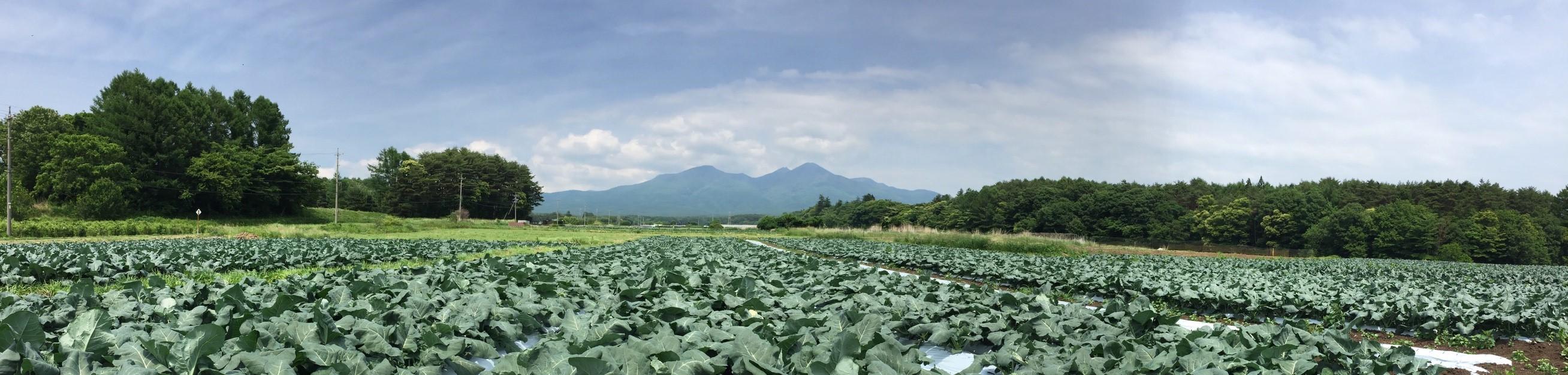 野菜_170629_0020